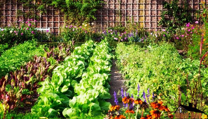 ไอเดียทำสวนครัว ปลูกกินเองภายในบ้าน maid-dee.comดูแลบ้าน