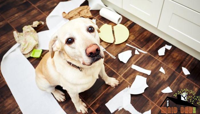 วิธีรับมือกับสัตว์เลี้ยงในบ้าน maid-dee.com ดูแลบ้าน